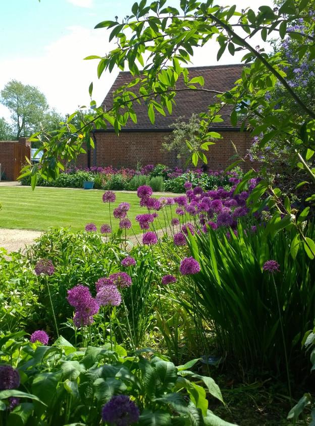 Allium Purple Sensation, Barn Conversion Project