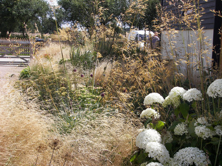Weekly Wander - Grasses in my Garden
