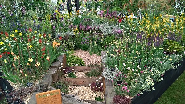 Chelsea Flower show 2017 daisy rootsDrought Tolerant Garden
