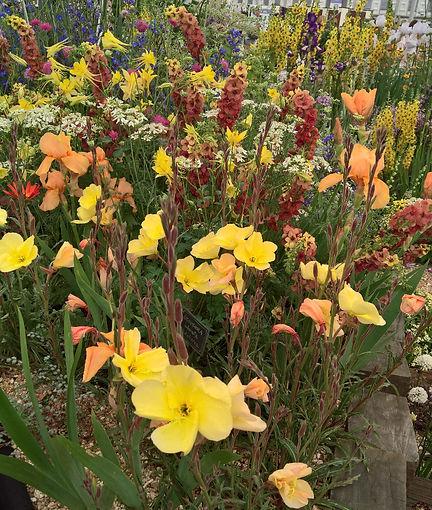 Chelsea flower show, Daisy Roots nursery