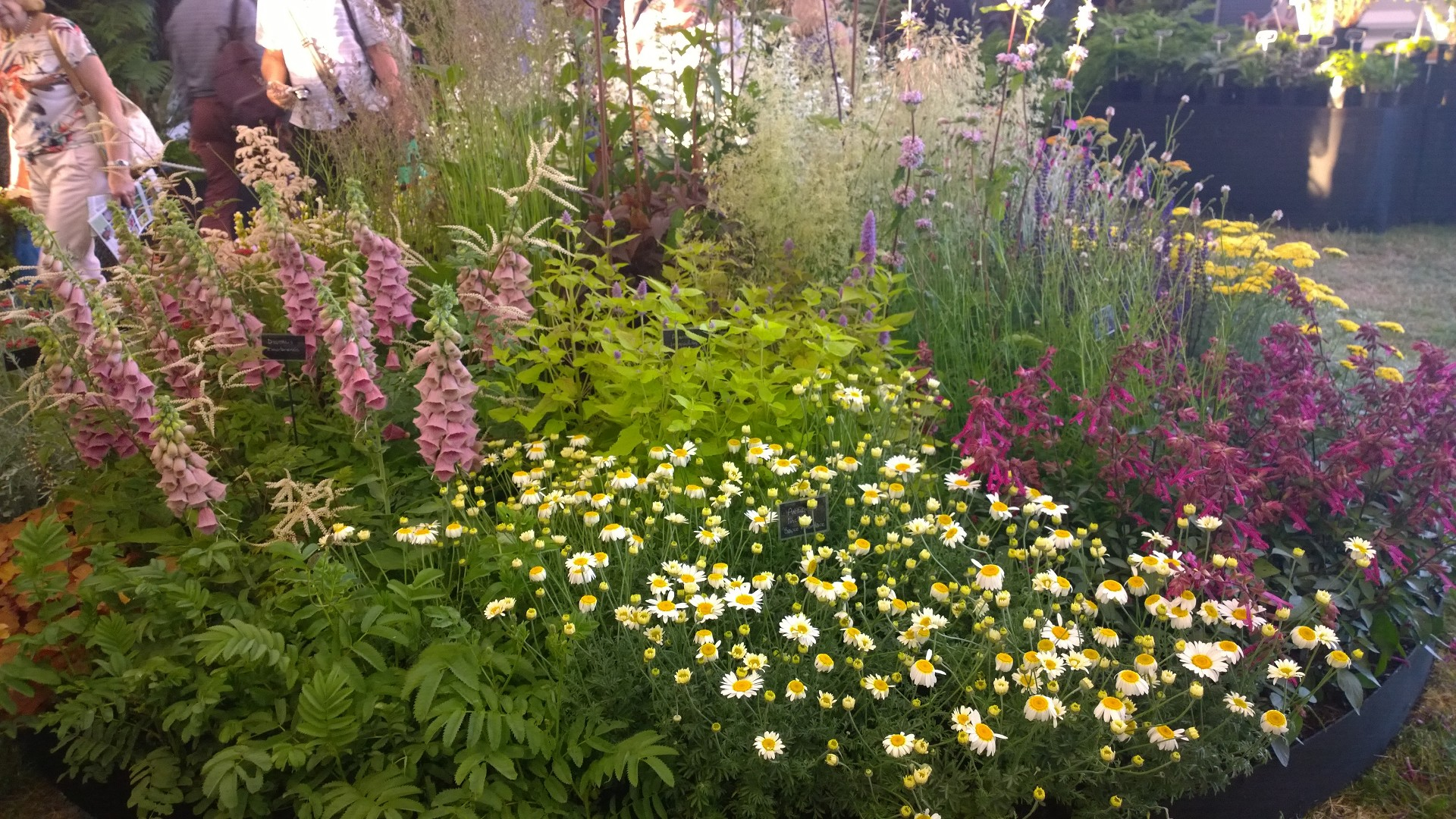 RHS Hampton Court Palace 2015