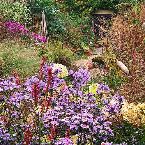 Autumn Colour Saturday 26th September