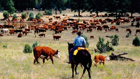 В росте цен на мясо в Киргизии обвинили Казахстан