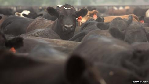 Австралия: Цены на скот достигли рекорда