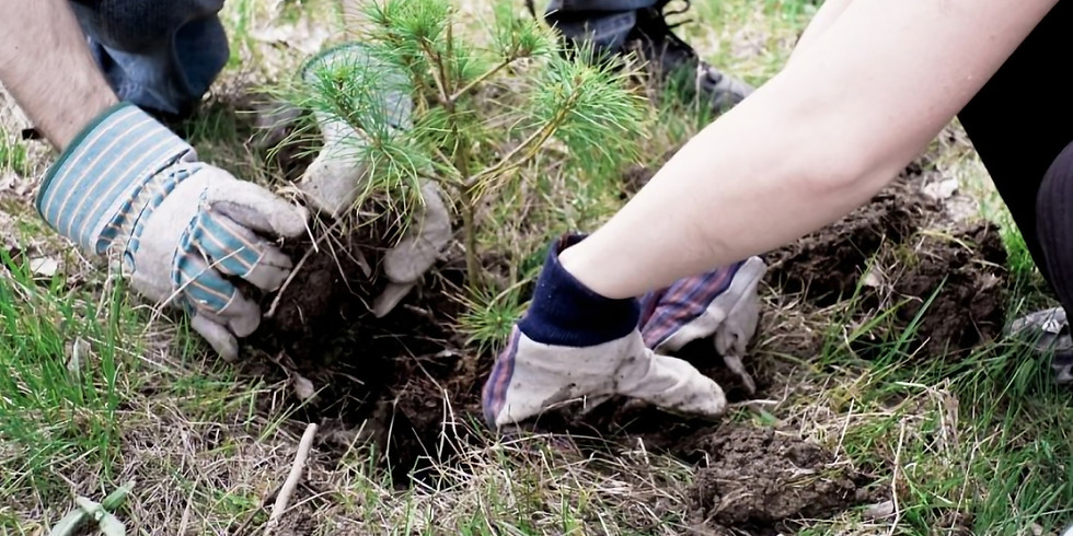 Planting Day - Atiu Creek