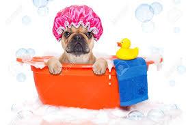Pourquoi toiletter son chien autant en hiver qu'en été ?