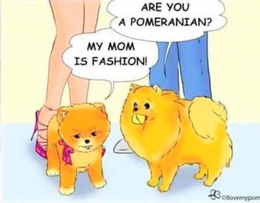 Les chiens qu'il ne faut pas raser !