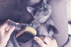 Un chat doit-il aussi être toiletté ?