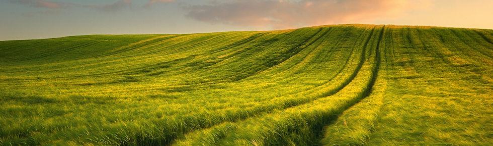 Wheat Field Hero.jpg