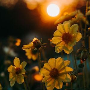 Canva - flower sun.jpg