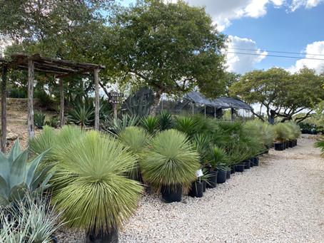 Desert Plants Have Arrived!