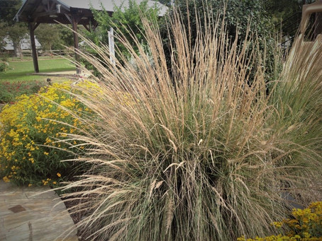 GARDENING WITH DEER-RESISTANT ORNAMENTAL GRASSES