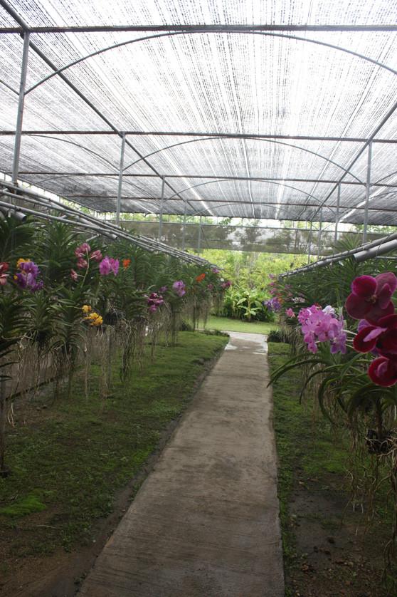 A fazenda das orquídeas