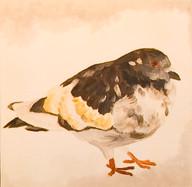 Street Pigeon Portrait