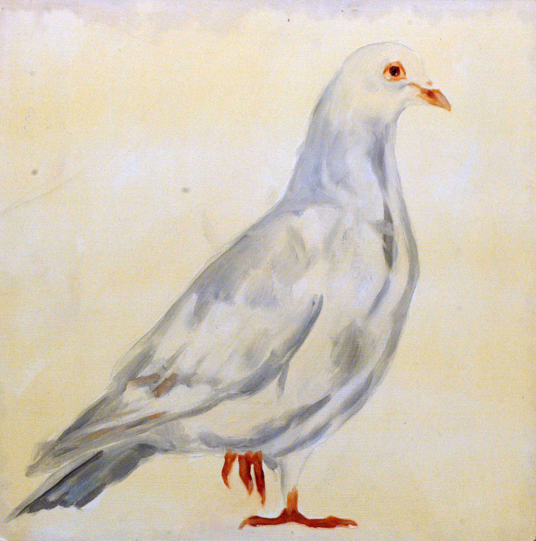 Street Pigeon Portraits