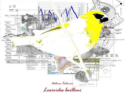 Natura Technica - Hawaiian palila songbird