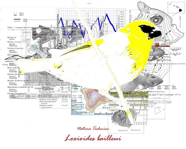 Natura Technica - Palila Hawaiian Songbird