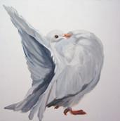 Fancy Pigeon - Fantail