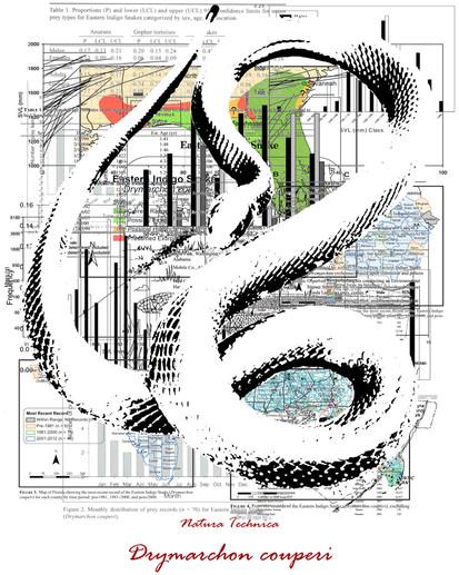 Natura Technica - Eastern Indigo Snake