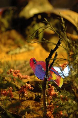 MANaged Landscape - Macaw