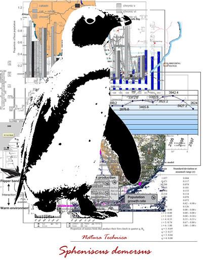 Natura Technica - African Penguin