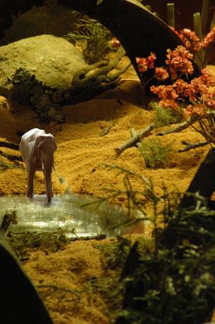 MANaged Landscape - Elephant