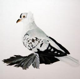 Fancy Pigeon - Fairy Swallow
