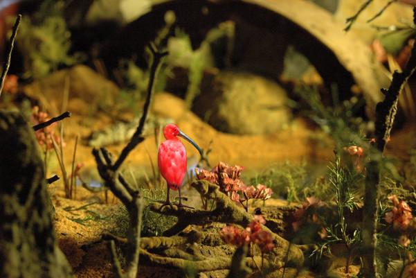 MANaged Landscape - Scarlet Ibis