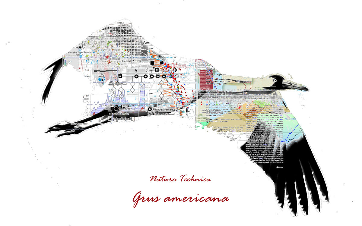 Natura Technica- Whooping Crane