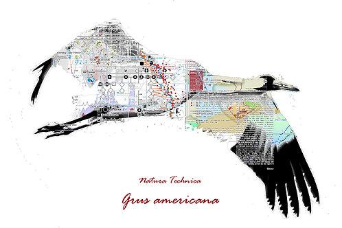 Natura Technica - Whooping crane