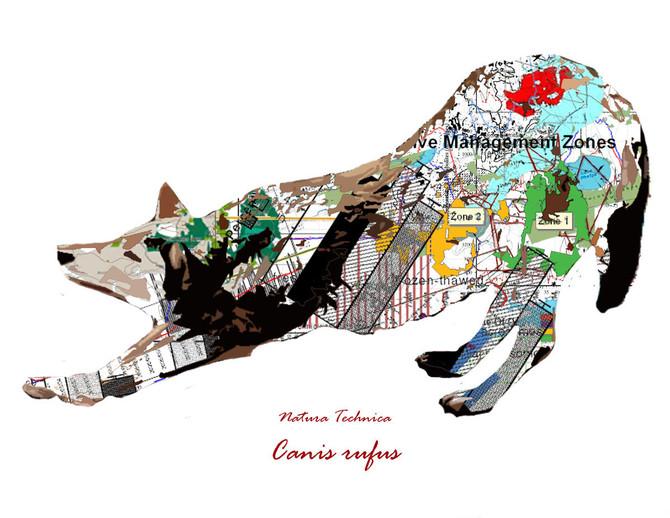 Natura Technica - Red Wolf.jpg