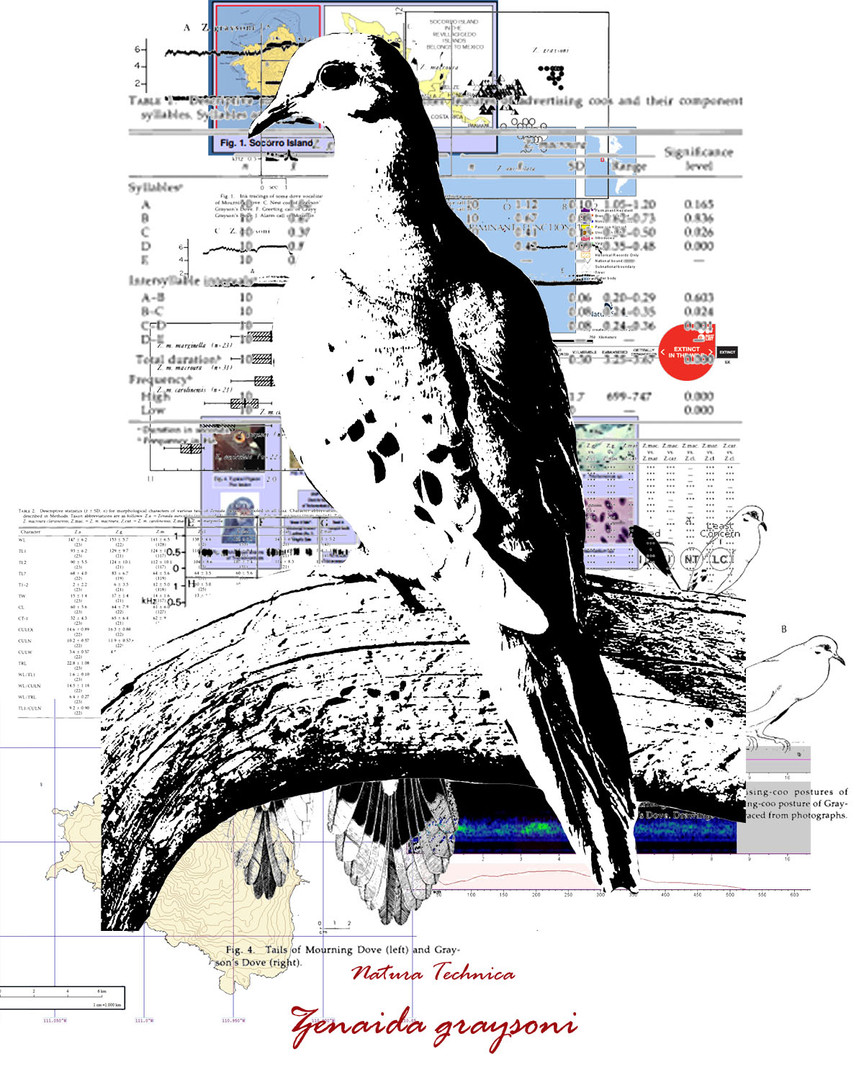 Natura Technica - Socorro Dove.jpg