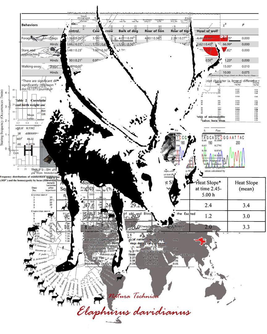 Natura Technica - Pere David's Deer26.jpg