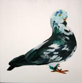 Fancy Pigeon - English Owl