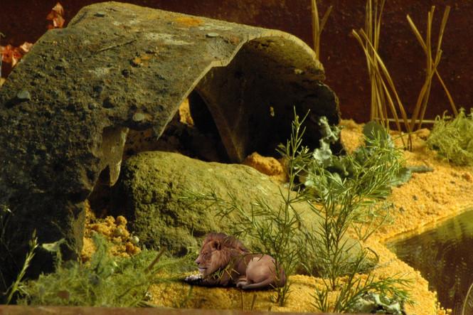 MANaged Landscape - Lion