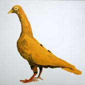 Fancy Pigeon - Stargard Shaker