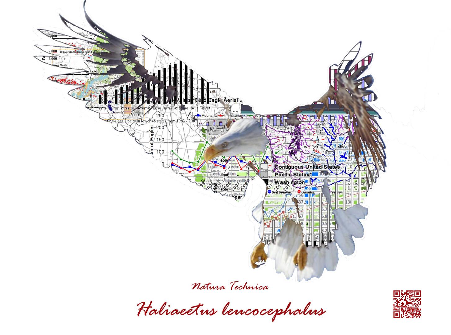Natura Technica - Bald Eagle