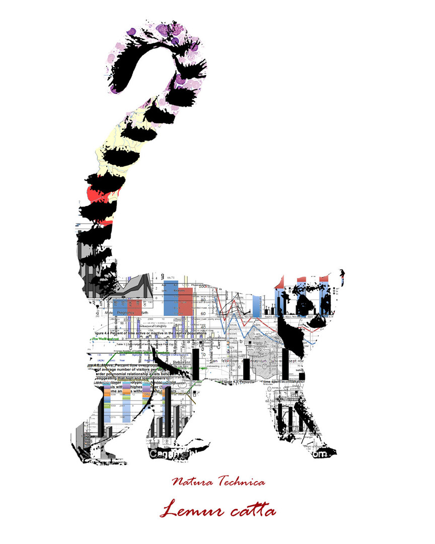 Natura Technica - Ring Tailed Lemur