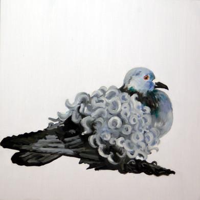 Fancy Pigeon - Frillback