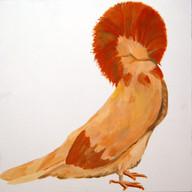 Fancy Pigeon - Jacobin
