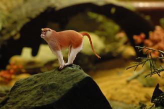 MANaged Landscape - Patas Monkey