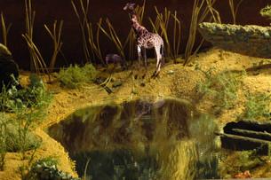 MANaged Landscape - Giraffe