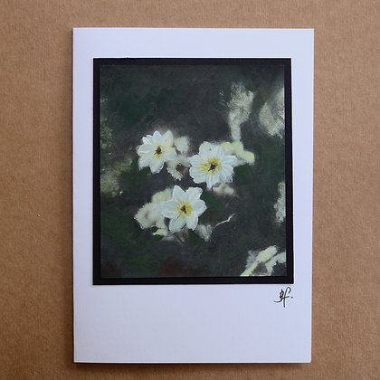 'Anenome Collection'  Greetings Card