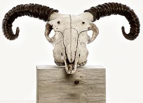 Sculptor : Illustrator : Collector .... Jennie McCall