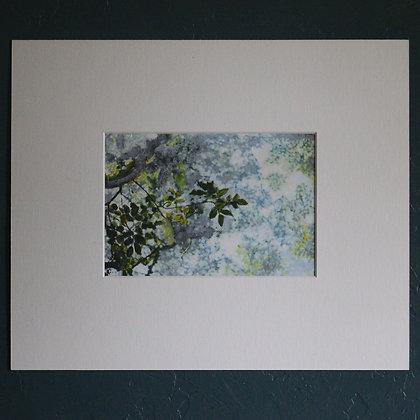 'Blue Sky + Leaves II Painting