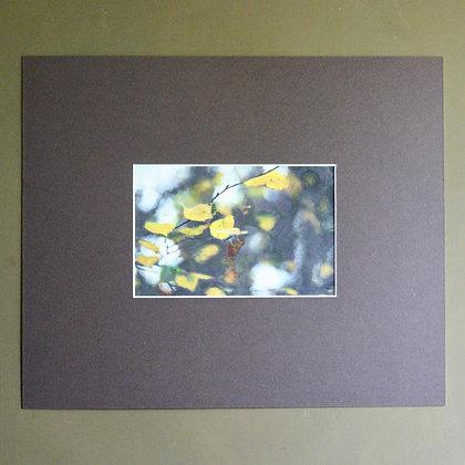 'Autumn Wood' Painting