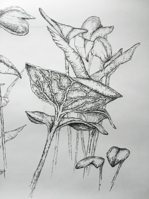 Microgreen Forrest
