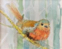 Robin (2).jpg