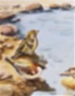 Sparrows (2).JPG