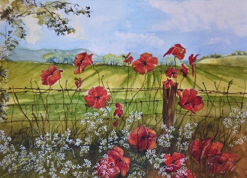 May poppies.JPG